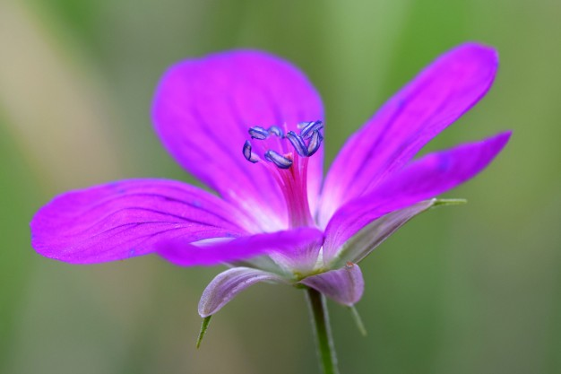 purple-flower-close-up_1161-39